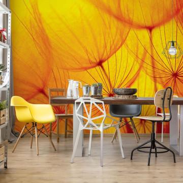 Orange Dandelion Photo Wallpaper Wall Mural