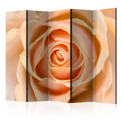 Paravan - Peach-colored rose II [Room Dividers]