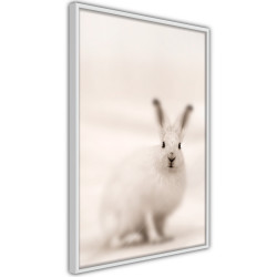 Poster - Curious Rabbit