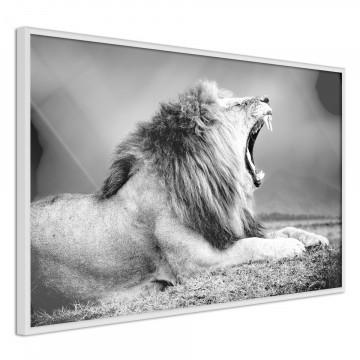 Poster - Yawning Lion