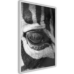 Poster - Zebra Is Watching You