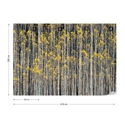 Rhythm Of Forest Photo Wallpaper Mural