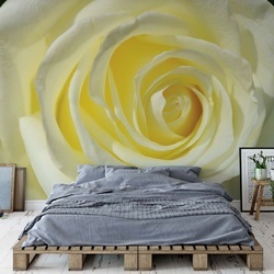 Rose Flower Cream Yellow Photo Wallpaper Wall Mural