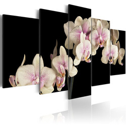 Tablou - An orchid on a contrasting background