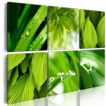 Tablou - Fresh green leaves
