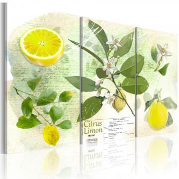 Tablou - Fruit: lemon