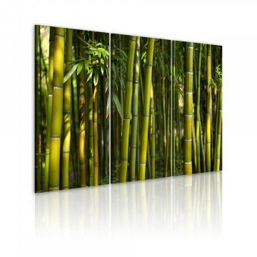 Tablou - Green bamboo