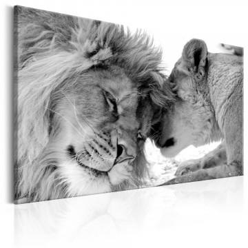 Tablou - Lion's Love