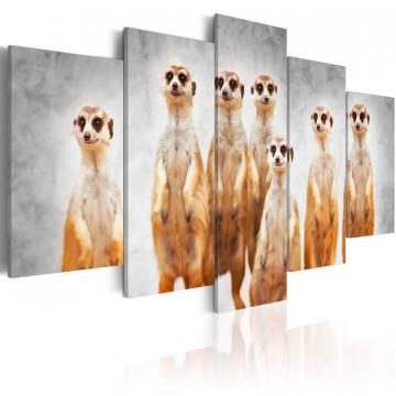 Tablou - Meerkats