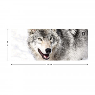 Wolf Photo Wallpaper Wall Mural