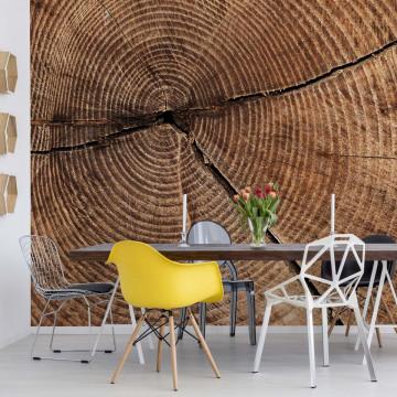 Wood Texture Tree Stump Photo Wallpaper Wall Mural