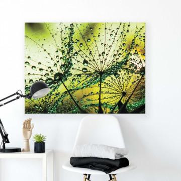 Dandelions & Butterflies Canvas Photo Print