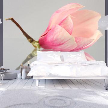 Fototapet - A lonely magnolia flower