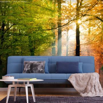 Fototapet autoadeziv - Forest Colours