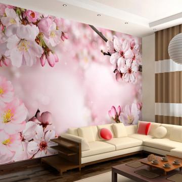 Fototapet autoadeziv - Spring Cherry Blossom
