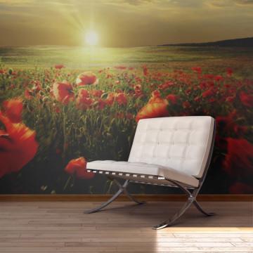 Fototapet - Morning on the poppy meadow