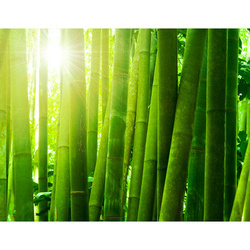 Fototapet - Sun and bamboo