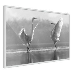 Poster - Black and White Herons