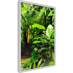 Poster - In the Rainforest