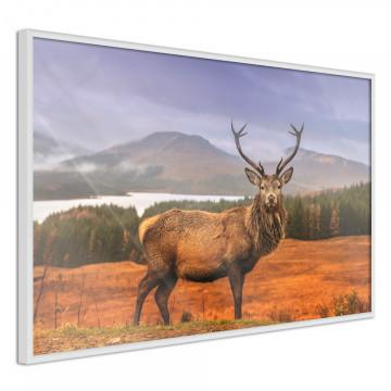 Poster - Majestic Deer
