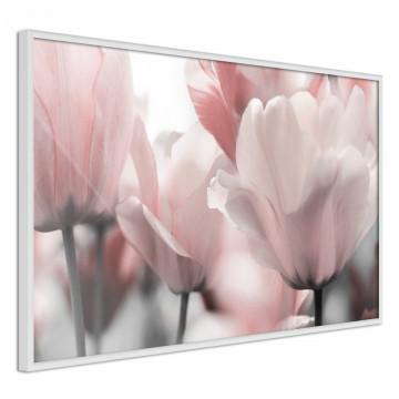 Poster - Pastel Tulips II