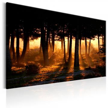Tablou - Forest Dawn
