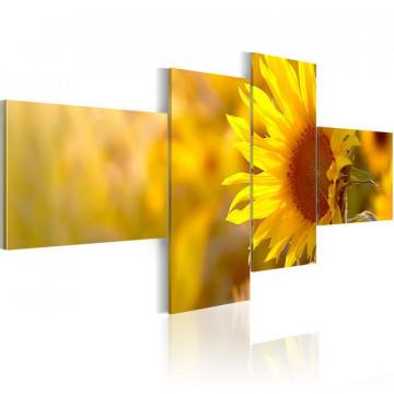 Tablou - Shiny sunflowers