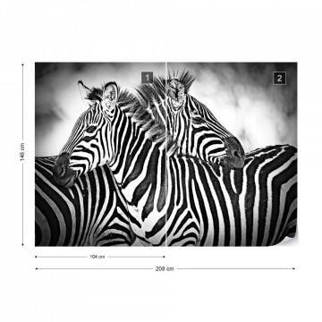 Zebras Black And White Photo Wallpaper Wall Mural