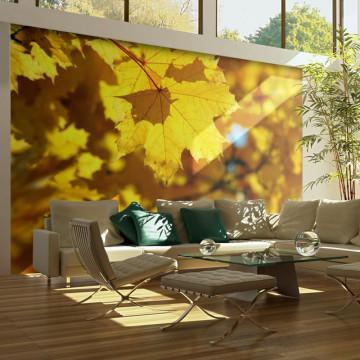 Fototapet - Sunlight on leaves of the maple