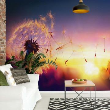 Dandelion Sunset Photo Wallpaper Wall Mural
