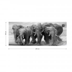 Elephants Black And White Animals Photo Wallpaper Wall Mural