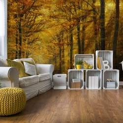 Enchanted Forest Photo Wallpaper Mural