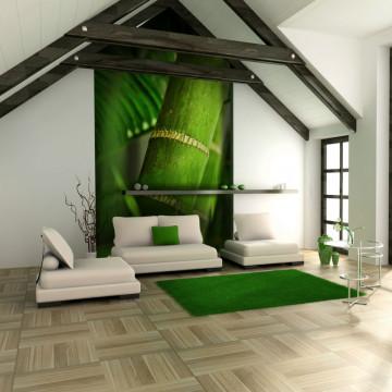 Fototapet - bamboo - detail