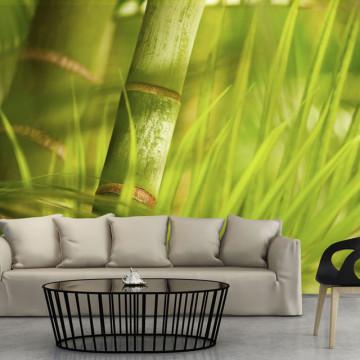 Fototapet - bamboo - nature zen