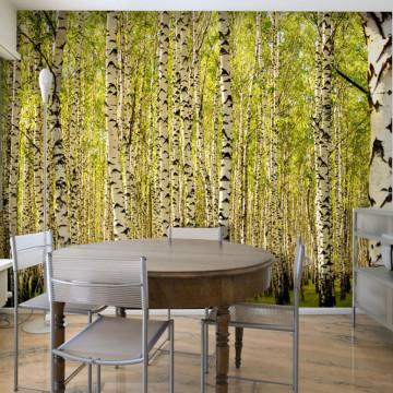 Fototapet - Birch forest