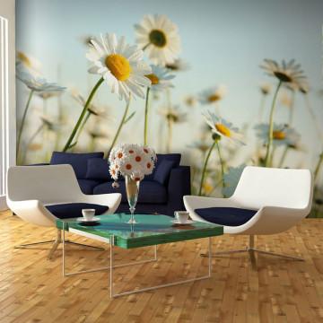 Fototapet - Daisies - spring meadow