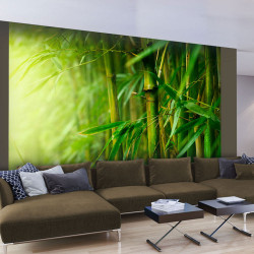 Fototapet - jungle - bamboo