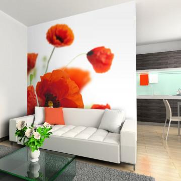 Fototapet - Poppies on the wihite background