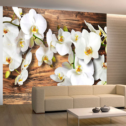 Fototapet - Snow-white orchids