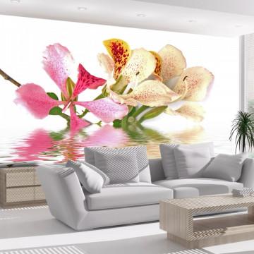 Fototapet - Tropical flowers - orchid tree (bauhinia)