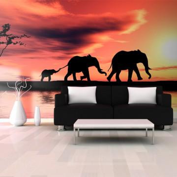 Fototapet XXL - elephants: family