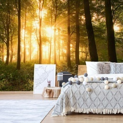 Light In The Forest Photo Wallpaper Mural