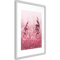 Poster - Amaranth Meadow