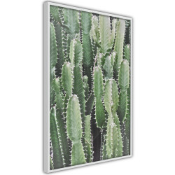 Poster - Cactus Plantation