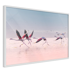 Poster - Flamingos Breaking into a Flight