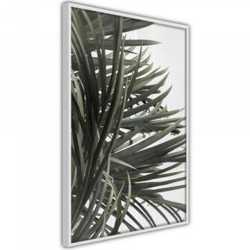 Poster - Little Tropics