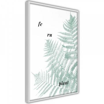 Poster - Pale Green Fern