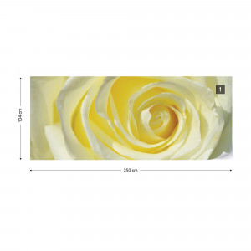 Rose Flower Cream Yellow Photo Wallpaper Wall Mural