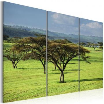 Tablou - African acacias