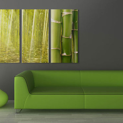 Tablou - Bamboo reflected on water
